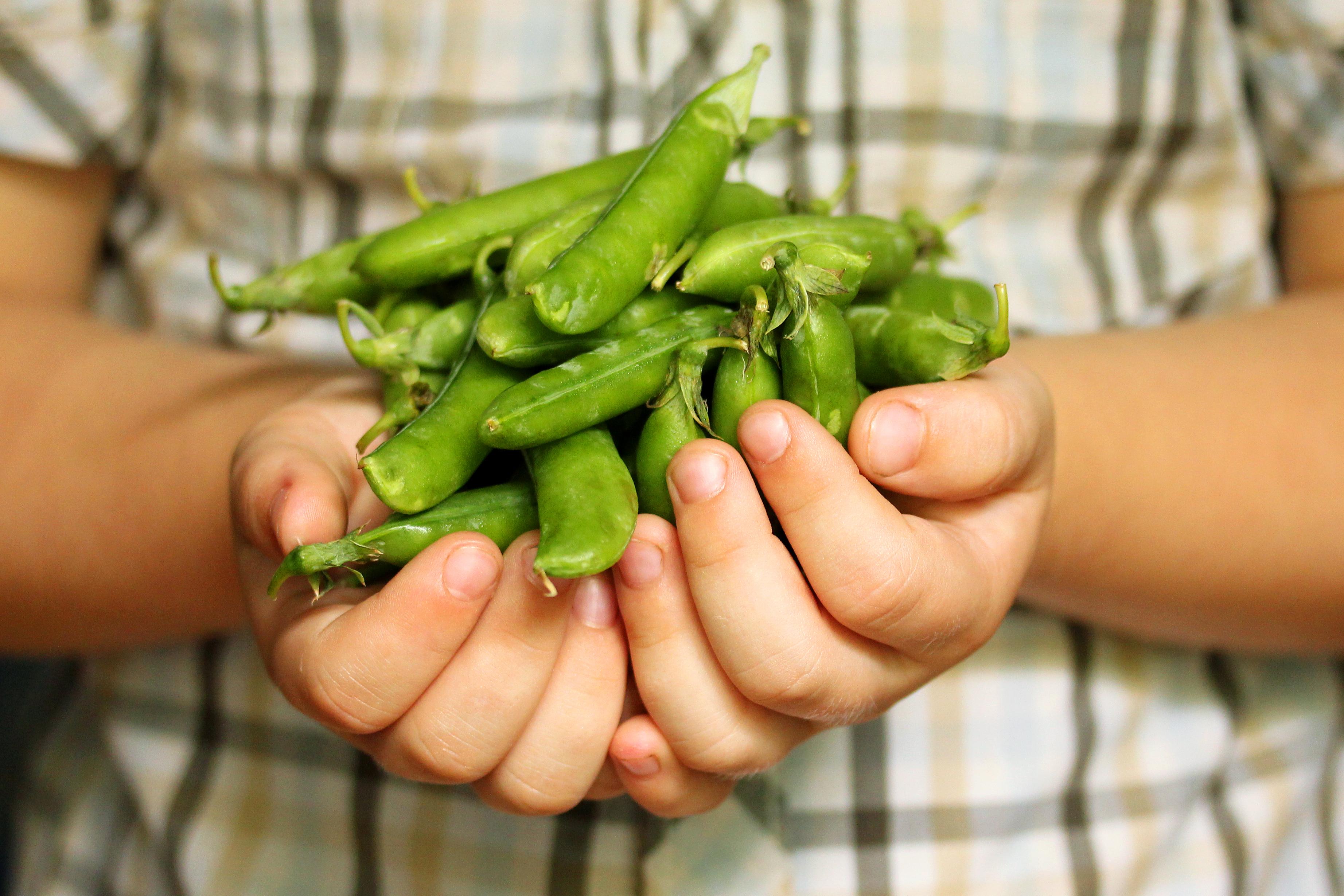 S(n)oepie s(n)oepie: gezond koken kun je leren 2